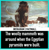 🤔: INSTAGRAMI FACTMALL  The woolly mammoth was  around when the Egyptian  pyramids were built. 🤔