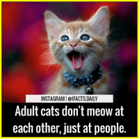 Memes, 🤖, and Adult: INSTAGRAMI @IFACTS.DAILY  Adult cats don't meow at  each other, just at people. cat