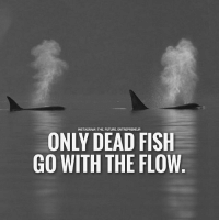 Only dead fish.... thefutureentrepreneur: INSTAGRAMITHE FUTURE. ENTREPRENEUR  ONLY DEAD FISH  GO WITH THE FLOW Only dead fish.... thefutureentrepreneur