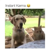 Omg, Ted, and Karma: Instant Karma  @hilarious.ted Omg this is extraordinary! (@hilarious.ted)