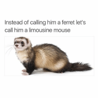 Dank, Ferret, and Mouse: Instead of calling him a ferret let's  call him a limousine mouse