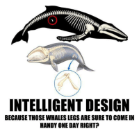Check out our secular apparel shop! http://wflatheism.spreadshirt.com/: INTELLIGENT DESIGN  BECAUSE THOSE WHALESLEGSARE SURETO COMEIN  HANDY ONE DAYRIGHT? Check out our secular apparel shop! http://wflatheism.spreadshirt.com/