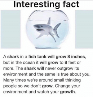 Same with commercial gyms vs hardcore gyms: Interesting fact  A shark in a fish tank will grow 8 inches,  but in the ocean it will grow to 8 feet or  more. The shark will never outgrow its  environment and the same is true about you.  Many times we're around small thinking  people so we don't grow. Change your  environment and watch your growth. Same with commercial gyms vs hardcore gyms