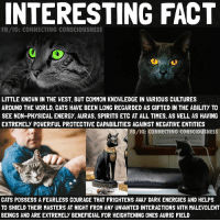 Anaconda, Cats, and Energy: INTERESTING FACT  FB/IG: CONNECTING CONSCIOUSNESS  LITTLE KNOWN IN THE WEST, BUT COMMON KNOWLEDGE IN VARIOUS CULTURES  AROUND THE WORLD, CATS HAVE BEEN LONG REGARDED AS GIFTED IN THE ABILITY TO  SEE NON-PHYSICAL ENERGY, AURAS, SPIRITS ETC AT ALL TIMES, AS WELL AS HAVING  EXTREMELY POWERFUL PROTECTIVE CAPABILITIES AGAINST NEGATIVE ENTITIES  FB/IG: CONNECTING CONSEHOUSNESS  CATS POSSESS A FEARLESS COURAGE THAT FRIGHTENS AWAY DARK ENERGIES AND HELPS  TO SHIELD THEIR MASTERS AT NIGHT FROM ANY UNWANTED INTERACTIONS WITH MALEVOLENT  BEINGS AND ARE EXTREMELY BENEFICIAL FOR HEIGHTENING ONES AURIC FIELD Cats purrs have been scientifically proven🔬 to be medically therapeutic for many illnesses due to the mHz frequency the purrs resonate at.🎚 🐈 Cats eyes👀 are able to continually see non physical energy. Auras, Spirits, Ghosts, Angels etc are all completely visible to cats at all times. This is a 100% fact.🐫 hence why the Egyptians carved this into stone, and cats were highly respected in ancient China as well as all over the world. 🐈 They have long been regarded as eyes to the other-side.🚧 They are very good judges of character because of their ability to see energy. Pay attention to how your cat reacts when meeting new people, they see more than meets the eye. 🤔 🐈 It is good to have more than one cat in the household so the burden(protection)is shared among them. 🛡They also guard you at night so no unwanted spirits can enter the room while you are asleep. 🛌That is why they like to sleep on your bed. If they think you are doing fine, they will not sleep that night with you. If there is something strange going on, they will all jump in bed with you and surround you.🏺 🐈 Cats spend the majority of their lives in the astralplane(dream world) and this is why they require so much sleep almost 16-20 hours a day for most cats. 😴 🐈 Felines have telepathy, they communicate by thought with each other and psychic owners. (We all have the ability to be psychic it's all about accessing the ability within you, again this is factual). Cats only vocalize themselves to get attention from humans.🔊 🐈