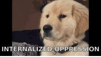 This cute ass dog jacking my shit: INTERNALIZED OPPRESSION This cute ass dog jacking my shit