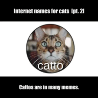 Moar catto memes. Which kind of cat owns you? 🐱 Follow @9gag - - 📷@lucidchart - - 9gag catto catmemes: Internet names for cats Ipt. 2l  catto  Cattos are in many memes. Moar catto memes. Which kind of cat owns you? 🐱 Follow @9gag - - 📷@lucidchart - - 9gag catto catmemes