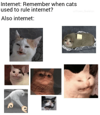Cats, Internet, and Don: Internet: Remember when cats  used to rule internet?  Also internet: Nothing has changed expect we dont use impact anymore