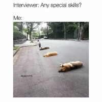 Memes, 🤖, and Interview: Interviewer: Any special skills?  Me:  @dabmoms Fuck you're hired..... what a good boy @dabmoms