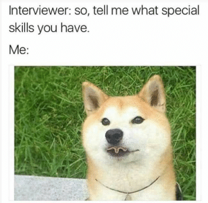 Funny, Animal, and Pictures: Interviewer: so, tell me what special  skills you have.  Me: Latest 24 Funny Animal Pictures You Need to See Today - JustViral.Net