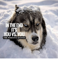 Perfect!: INTHE END  OUVS YOU  THE POSITIVE QUOTES Perfect!