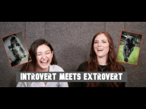 writer-adventurer: sheepishdove:   heyintrovert: INTROVERT MEETS EXTROVERT I actually really loved this- i definitely bonded with the introvert side of it more but I loved hearing the extrovert point of view and understanding how they recharge and their thoughts on things I guess. Interesting watch   I found their body language very interesting. Like, when the introvert was talking the extrovert was almost leaning in to what she was saying, and was looking directly at her for most of her speech. By contrast, the introvert remained facing forward and didn't make eye contact, even though she was actively listening and engaging in what the extrovert was saying. The extrovert also used her body much more when she talked, using her hands and other movements to aid her talking. The way she talked also had a lot more dynamic, more lifts and falls, than the reserved tone of the introvert. The introvert also started off very quiet, but it was clear that she was receptive to the extrovert's energy, because she got louder and more willing to talk as the video went on. I don't know, I just thought it was really cool how their body language aligned with their personality types 😅 : INTROVERT MEETS EXTROVERT writer-adventurer: sheepishdove:   heyintrovert: INTROVERT MEETS EXTROVERT I actually really loved this- i definitely bonded with the introvert side of it more but I loved hearing the extrovert point of view and understanding how they recharge and their thoughts on things I guess. Interesting watch   I found their body language very interesting. Like, when the introvert was talking the extrovert was almost leaning in to what she was saying, and was looking directly at her for most of her speech. By contrast, the introvert remained facing forward and didn't make eye contact, even though she was actively listening and engaging in what the extrovert was saying. The extrovert also used her body much more when she talked, using her hands and other movements to aid her talking. The 