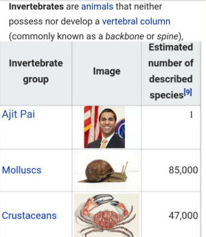 Animals, Image, and Species: Invertebrates are animals that neither  possess nor develop a vertebral column  (commonly known as a backbone or spine),  Estimated  number of  described  species  Invertebrate  Image  group  Ajit Pai  Molluscs  85,000  Crustaceans  47,000