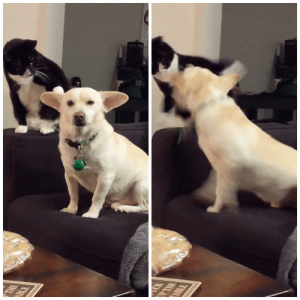 Invest in a new dog/cat meme with tons of potential: Invest in a new dog/cat meme with tons of potential