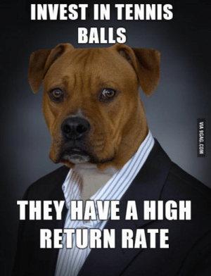 Logic, Tennis, and Dog: INVEST IN TENNIS  BALLS  THEYHVE A HIGH  RETURN RATE Dog Logic.
