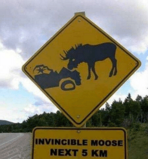 Meanwhile in Canada..: INVINCIBLE MOOSE  NEXT 5 KM Meanwhile in Canada..