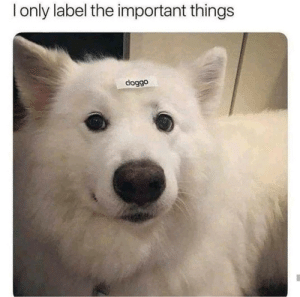 label: Ionly label the important things  doggo