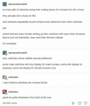 Tumblr, Birds, and Gifs: ipecacandcivetoil  so many gifs of ostriches doing their mating dance for humans but did u know  they actually did a study on this  and ostriches repeatedly found humans more attractive than other ostriches  yes  ostrich farmers have trouble setting up their ostriches with each other because  they're just not interested, they want their farmers instead  it's incredible  ipecacandcivetoil  also, ostriches show notable sexual preference  some male ostriches will only display for male humans, some will display for  anybody, some will display for female humans only  prinsaws  I can't believe ostriches are reverse furries  keksetsu  great we gotta kinkshame the fuckin birds now  384,896 notes skinaffinity.net