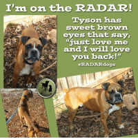 """This handsome boy, Tyson, wants to show you some love.  How about showing him some love with a donation.  Donations help cover our cost when we pay for needed vet care.  Please donate to Tyson's Fund - $225 raised of $340 goal: http://radardogs.org/tyson2: Ira, on the RADAR!  Tyson has  sweet brown  eyes that say,  """"just love me  and I will love  i you back!""""  #RADAR dogs This handsome boy, Tyson, wants to show you some love.  How about showing him some love with a donation.  Donations help cover our cost when we pay for needed vet care.  Please donate to Tyson's Fund - $225 raised of $340 goal: http://radardogs.org/tyson2"""