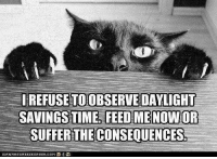 Daylight Savings Time, Memes, and Daylight Savings: IREFUSETOOBSERVE DAYLIGHT  SAVINGS TIME FEED ME NOW OR  SUFFER THE CONSEQUENCES.