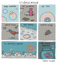 iridescence  oil buddles  Soap bubbles  old CDs  weird birds  sea shells  beetle wings  the world  gleams.  In ordinary places  an  GRANT SNIDER ✨🌈✨ http://tumblr.co/6185DKZPv (by Incidental Comics)