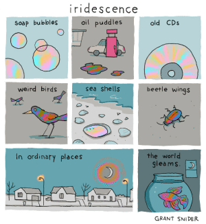 Shells: iridescence  oil puddles  old CDs  Soap bubbles  beetle wings  weird birds  sea shells  the world  gleams.  In ordinary places  GRANT SNIDER