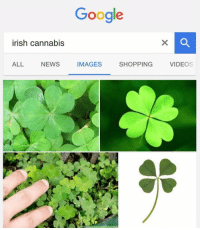 Blunts, Google, and Irish: irish cannabis  ALL NEWS  Google  IMAGES  SHOPPING  VIDEOS A good ol luck blunt🍀😌👌 . . oc ireland ireland🍀 ireland🇮🇪 mariana merijiona xd lazymeme
