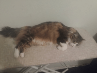 Cat, Beds, and Great