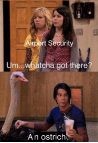 Got, Ostrich, and Security: irport Security  tcha got there?  An ostrich'. no liquids here ma'am