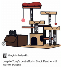 Boxing, Girls, and Avengers: IS  if the girlinthebyakko  despite Tony's best efforts, Black Panther still  prefers the box ~ Cap's Best Girl ☆☆