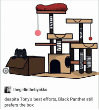 Boxing, Irs, and Memes: IS  IR the girlinthebyakko  despite Tony's best efforts, Black Panther still  prefers the box