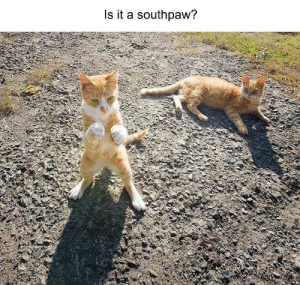 38 Funny Animal Photos You Really Just Need To See For Yourself - JustViral.Net: Is it a southpaw? 38 Funny Animal Photos You Really Just Need To See For Yourself - JustViral.Net
