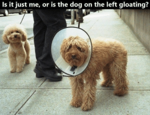 There's nothing like some good laughs on Sunday morning.#animalmemes #animals #funnyanimals #funnymemes #dogmemes #catmemes: Is it just me, or is the dog on the left gloating? There's nothing like some good laughs on Sunday morning.#animalmemes #animals #funnyanimals #funnymemes #dogmemes #catmemes
