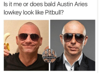 Love, Memes, and Yo: Is it me or does bald Austin Aries  lowkey look like Pitbull? Yo I didn't mean to do Austin dirty like this, I love him but I totally see the resemblance 💀💀 austinaries kevinowens chrisjericho romanreigns braunstrowman sethrollins ajstyles deanambrose randyorton braywyatt jindermahal baroncorbin charlotte samoajoe shinsukenakamura samizayn johncena sashabanks brocklesnar bayley alexabliss themiz finnbalor kurtangle wwememes wwememe wwefunny wrestlingmemes wweraw wwesmackdown