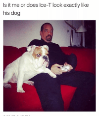(@theladbible) is a great meme page!: Is it me or does lce-T look exactly like  his dog (@theladbible) is a great meme page!
