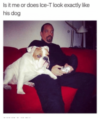 Memes, 🤖, and Dog: Is it me or does lce-T look exactly like  his dog 😂😂👏 @will_ent - -rp @_theblessedone - - - - - text post textpost textposts relatable comedy humour funny kyliejenner kardashians hiphop follow4follow f4f kanyewest like4like l4l tumblr tumblrtextpost imweak lmao justinbieber relateable lol hoeposts memesdaily oktweet funnymemes hiphop bieber trump