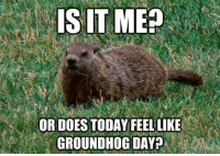 Groundhog Day: IS IT ME  OR DOES TODAY FEEL LIKE  GROUNDHOG DAY?