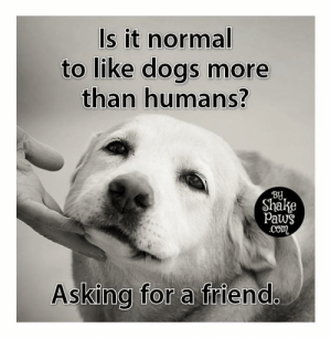 Yep, perfectly normal 😃: Is it normal  to like dogs more  than humans?  BU  Shake  Paws  com  Asking for a friend Yep, perfectly normal 😃
