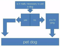 Lying, Dog, and Yes: is it really necessary to pet  a dog  you're  lying  yes  no  pet dog