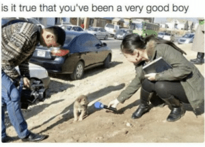 https://t.co/zZEKFDOCWD: is it true that you've been a very good boy https://t.co/zZEKFDOCWD