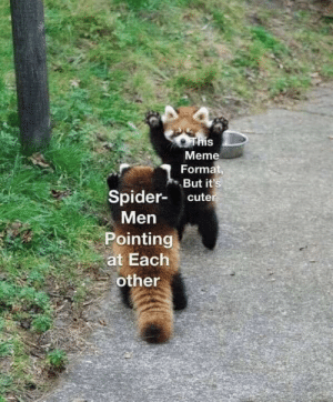 Cute, Meme, and Red Pandas: IS  Meme  Format,  But it's  Spider- cute  Men  Pointing  at Each  other srsfunny:  red pandas  spider-man