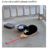 Memes, Spooky, and 🤖: is my cat a witch please confirm spooky