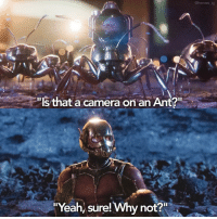 "I can't wait for Ant-Man and the Wasp 😍: ""Is that a camera on anAnt?""  ""Yeah, sure! Why not?  @heroes ig I can't wait for Ant-Man and the Wasp 😍"