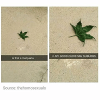 😱😱: is that a marijuana  Source: thehomosexuals  in MY GOOD CHRISTIAN SUBURBS 😱😱