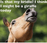I know I'm not the only with with a horse that thinks this way! 🙈: Is that my bride? I think  I might be a giraffe  today I know I'm not the only with with a horse that thinks this way! 🙈