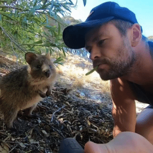 Is that quokka worthy? Definitely.  By Chris Hemsworth: Is that quokka worthy? Definitely.  By Chris Hemsworth