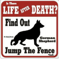 life after dead....: Is There  LIFE DEATH?  Find Out  German  Shepherd  Jump The Fence life after dead....