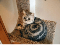 Is this a cat or a snail? Follow @9gag - - 9gag cinnamonroll instacat snail: Is this a cat or a snail? Follow @9gag - - 9gag cinnamonroll instacat snail