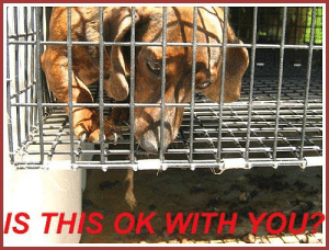 Dogs, Memes, and Mother's Day: IS THIS OK WITH YOU2 Puppy Mill Action Week is observed the week before Mother's Day. That's fitting, as mother dogs are usually the ones treated most poorly in puppy mills.  #dontshopadopt #notopuppymills