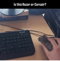 😂😂: Is this Razer or Corsair?  WERE R 😂😂