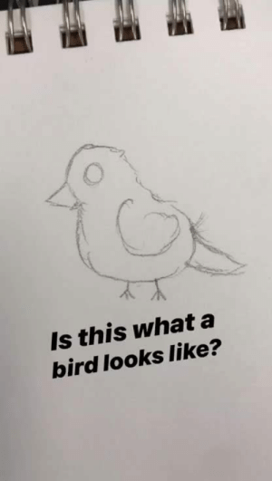 What, This, and Like: Is this what a  bird looks like? I tried to draw a bird